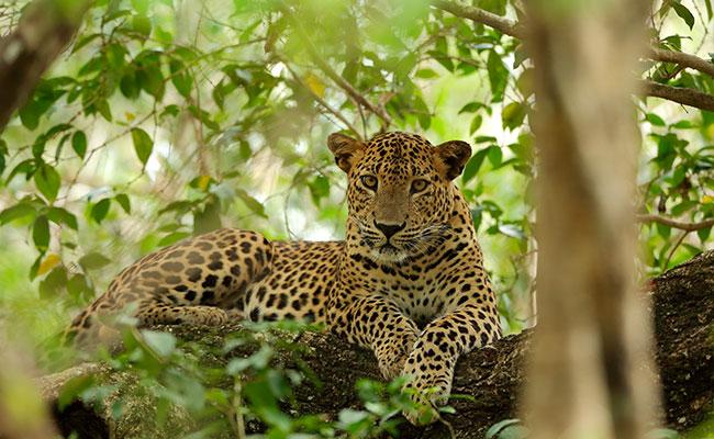 Safari Tour Packages